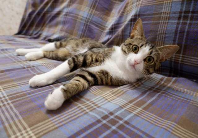 Отдам даром: Замечательный кот в поисках самой лучшей