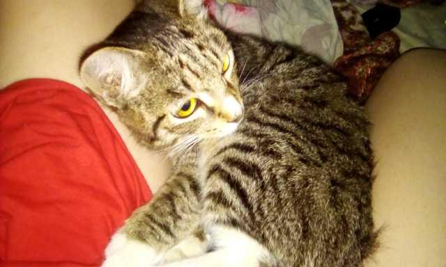Отдам даром: Нашли кот