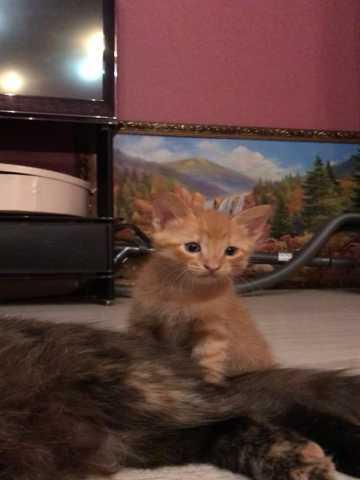 Отдам даром: 2 очаровтельных котенка