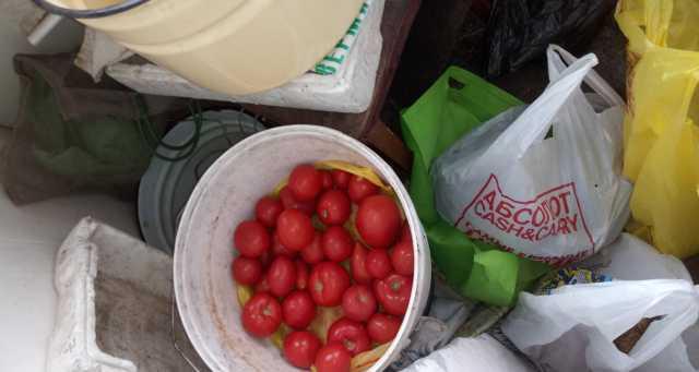 Продам: помидоры,кабачки