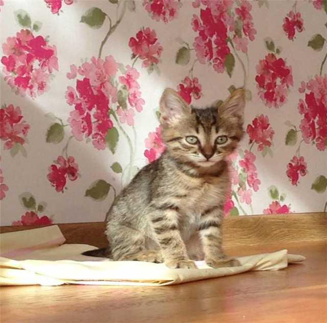 Отдам даром: Чудесные котята метисы в добрые руки