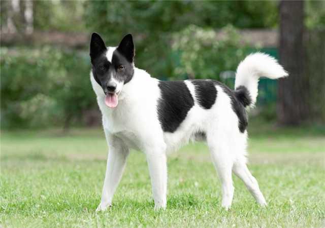 Отдам даром: Красивый пёс Рэнди в добрые руки!