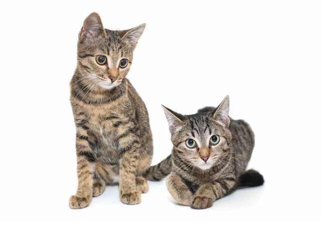Отдам даром: Полосатые котята в дар