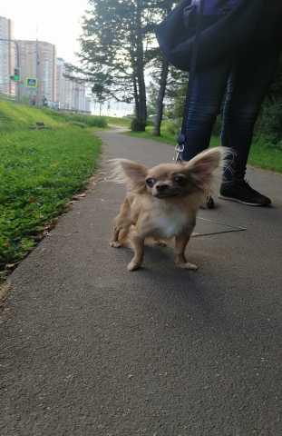Куплю: Убежала собака