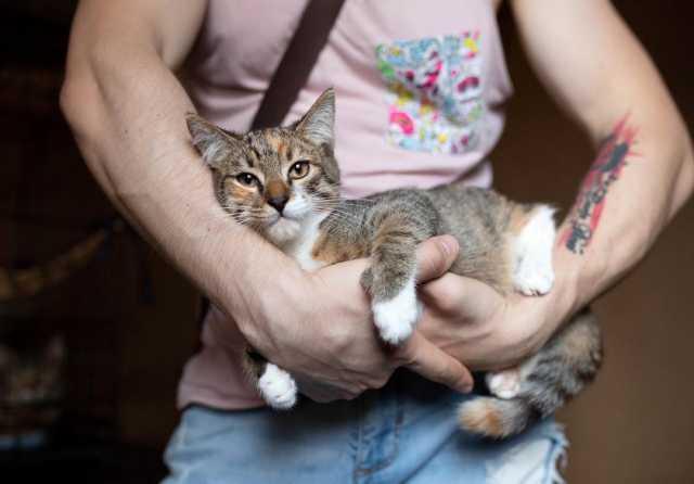 Отдам даром: Кошечка Ария ждет свою семью