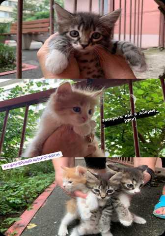 Отдам даром: Котята, возраст 2 месяца