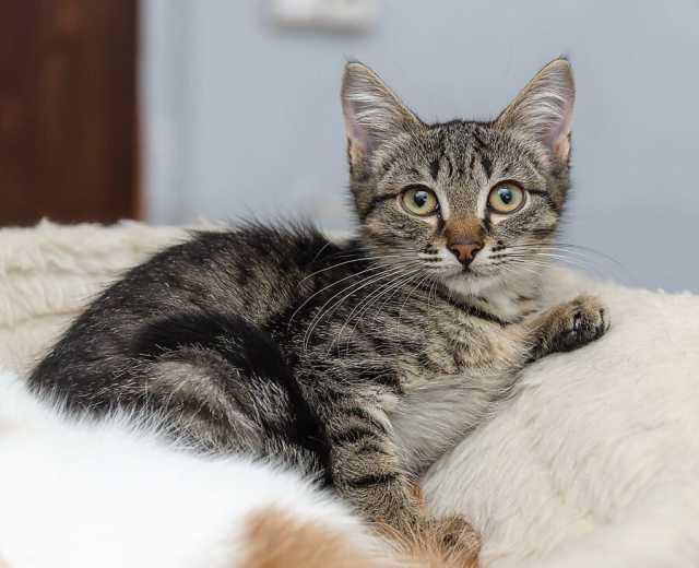 Отдам даром: Котята в хорошие руки. Новосибирск