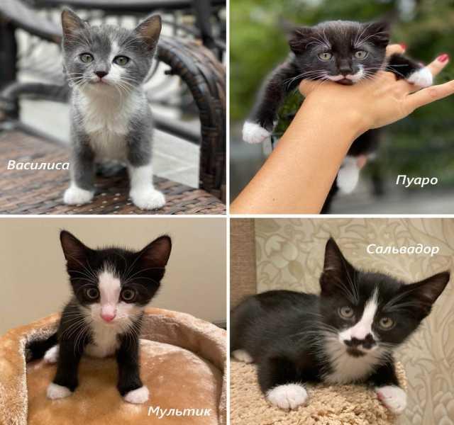 Отдам даром: Котята в добрые руки!