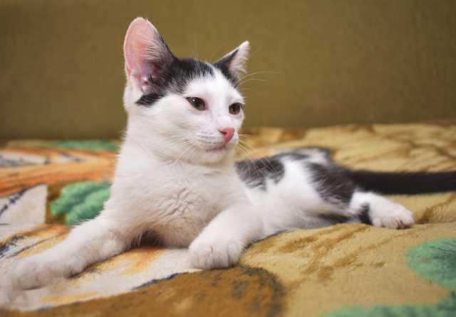 Отдам даром: Котёнок Муха. Новосибирск в хорошие руки