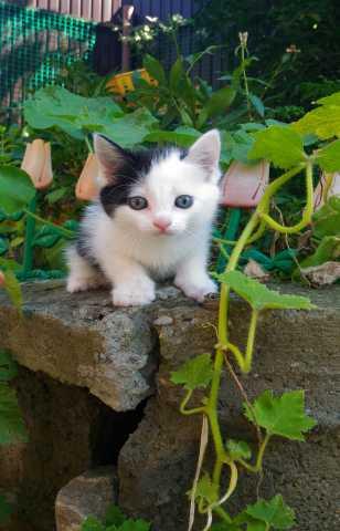Отдам даром: Котята-девочки ищут дом
