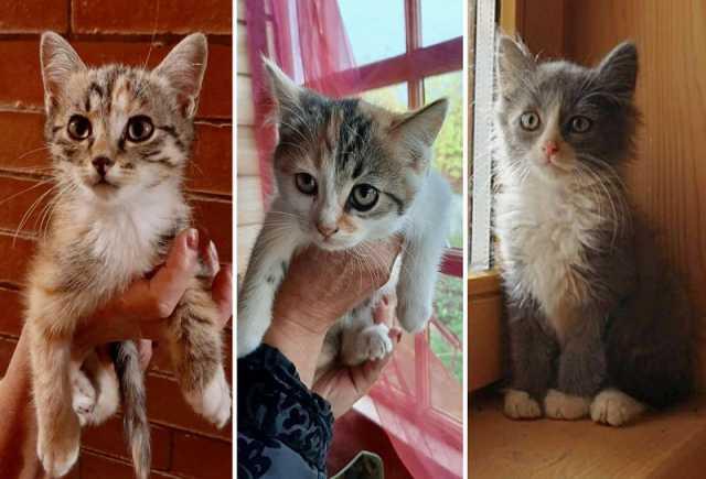 Отдам даром Чудесные котята-девочки ищут дом!
