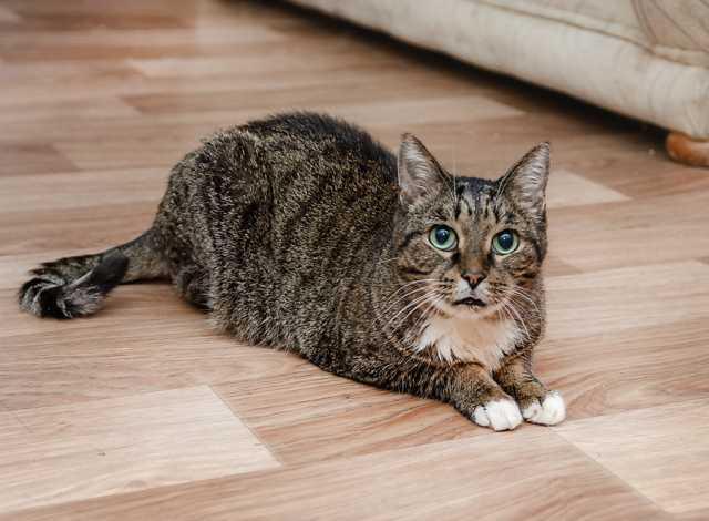Отдам даром: Кот Амур ищет хозяина. В хорошие руки