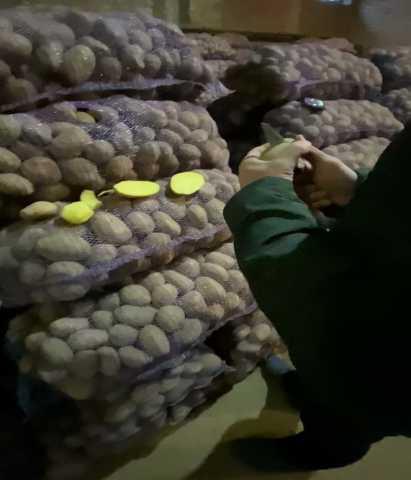 Продам: Картофель оптом с КФХ