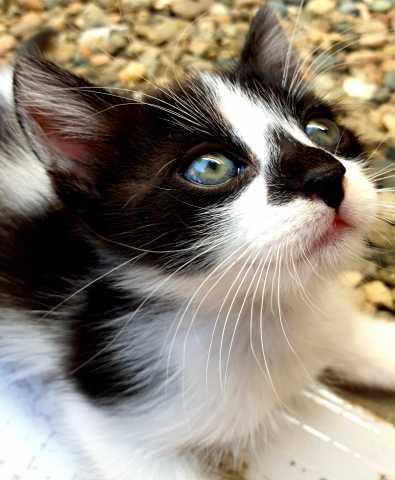 Отдам даром: котик 1,3 мес