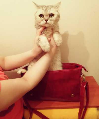 Продам: женскую сумочку Ecosusi Афигенную