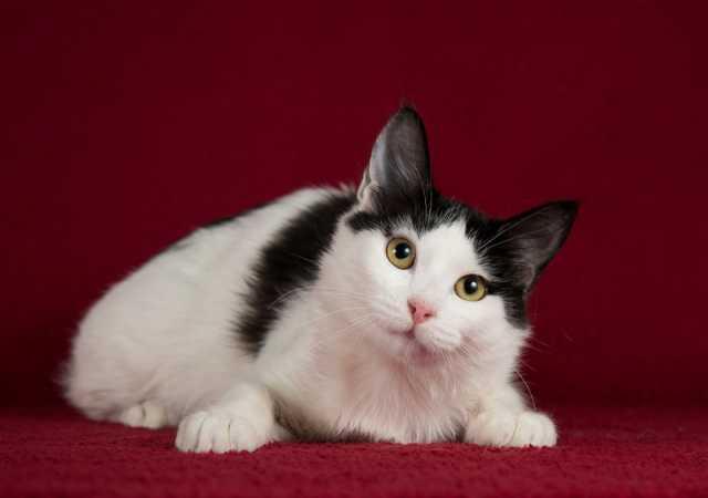 Отдам даром: Ищет дом котенок турецкого вана Маня