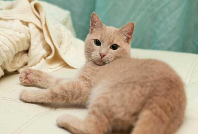 Отдам даром: Ладненький красавчик кот Филя ищет дом
