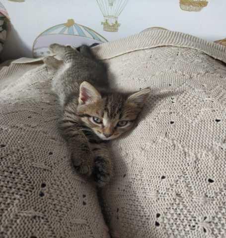 Отдам даром: Котята 2 мес