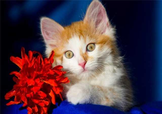 Отдам даром: Ищут дом котята Альфа, Мышка и Рыжик