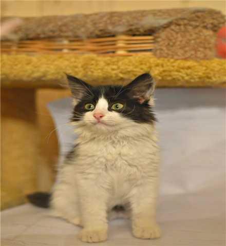 Отдам даром: Очаровательный котенок Мурка ищет дом