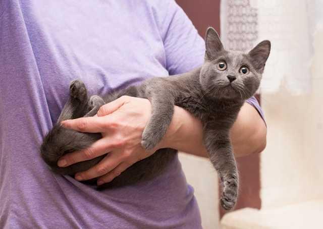 Отдам даром: Шикарные котятки Луи и Лилу в добрые рук