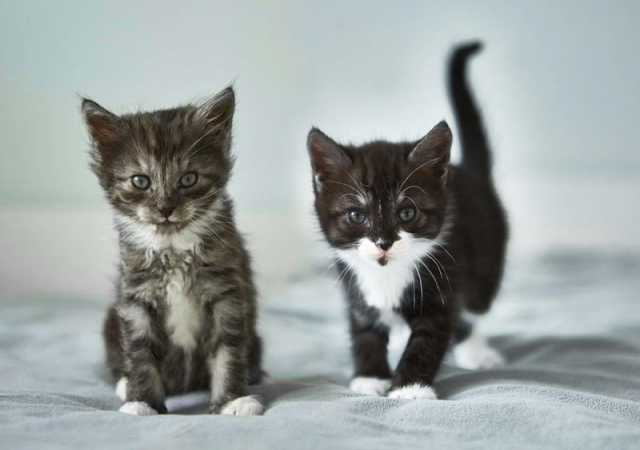 Отдам даром: Котята ищут свой дом