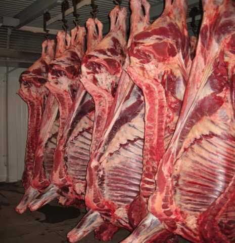 Продам: Свинина полутуши оптом