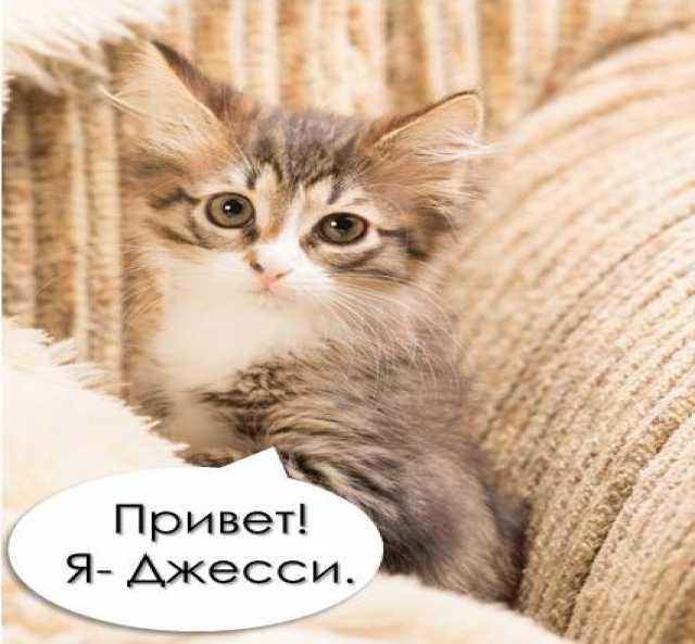 Отдам даром: Джесси- котёнок с «моторчиком»