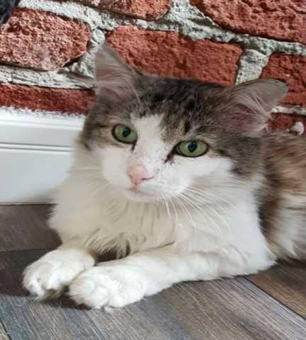Отдам даром: Ищет свою семью бывшедомашний кот Лапик
