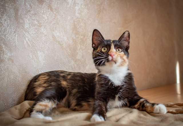 Отдам даром: Котёнок Ириска (есть видео)