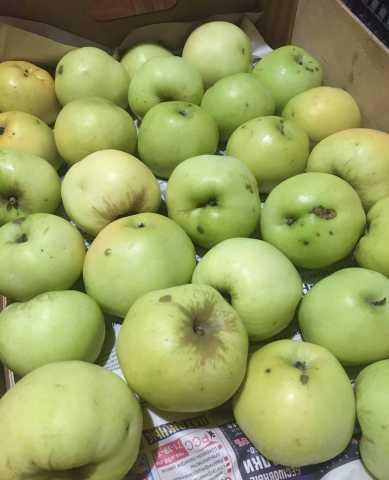 Продам: Яблоки