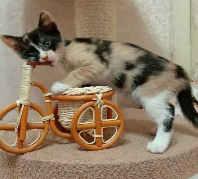 Отдам даром: Целый букет разноцветных ласковых котят!