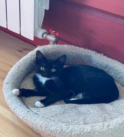 Отдам даром: Маленькая котодевочка маркиза Лилу
