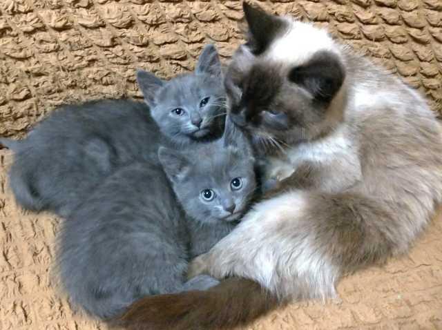 Отдам даром: Два очаровательных котенка