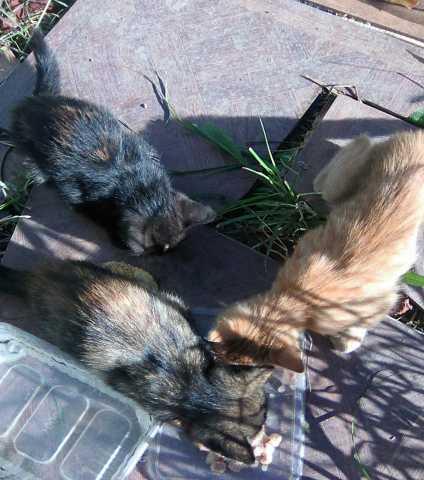 Отдам даром: Очаровательные котятки - пушистики