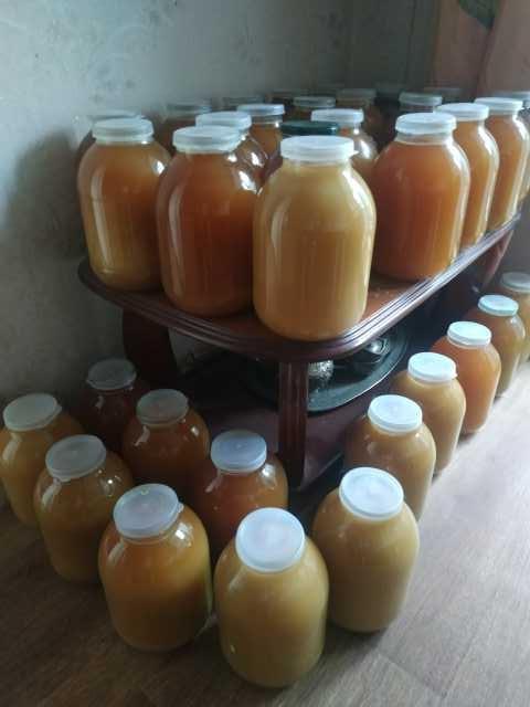 Продам: Мёд цветочный, донниковый
