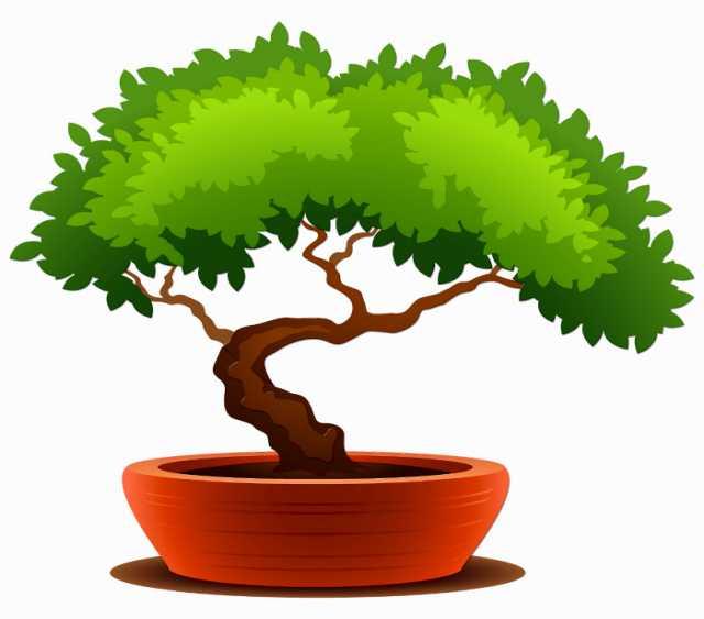 Продам: Бонсай - Карликовое дерево