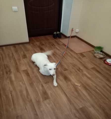 Отдам даром: Собака на счастье