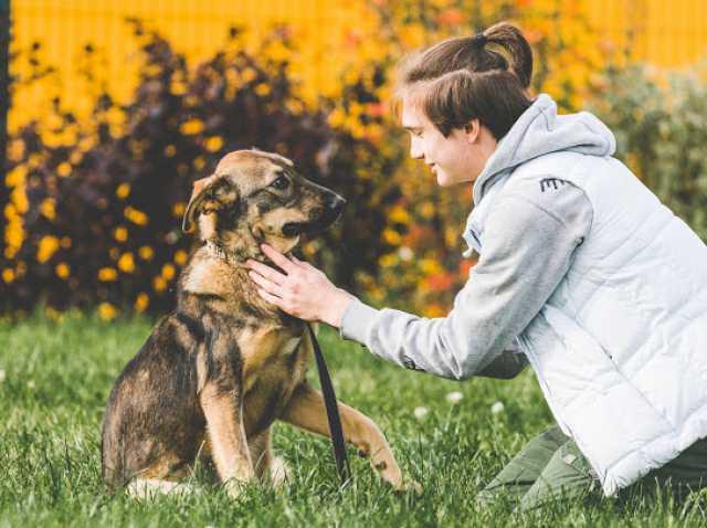Отдам даром: Ищет дом красивая, статная щенок-подрост