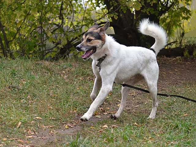 Отдам даром: Молодой, крупный, воспитанный пес Тарзан
