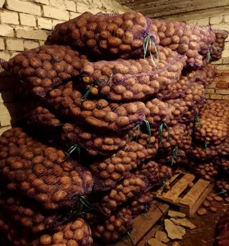 Продам: Картошка-овощи, картофель, лук, капуста