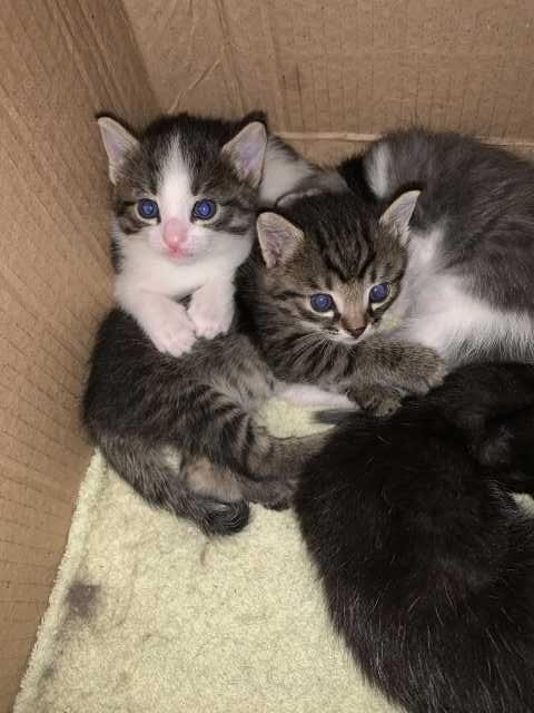 Отдам даром: Симпатичные котята