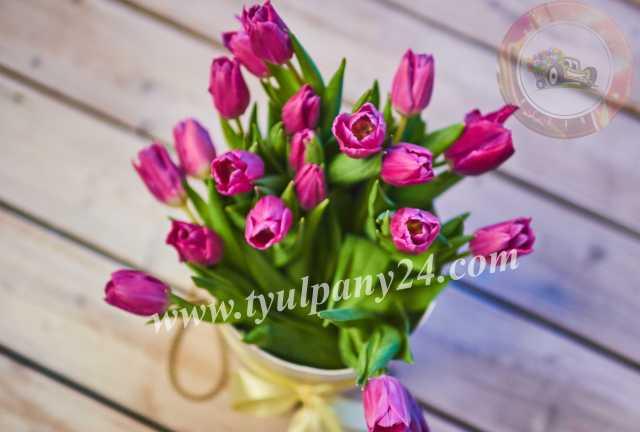 Продам: Тюльпаны оптом Иркутск (45-70см), мимоза