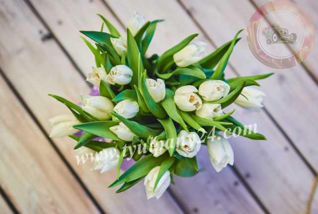 Продам: Тюльпаны оптом Улан-Удэ (45-70см),мимоза