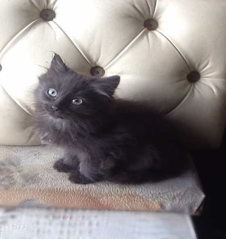 Отдам даром: Котёнок девочка 3 мес