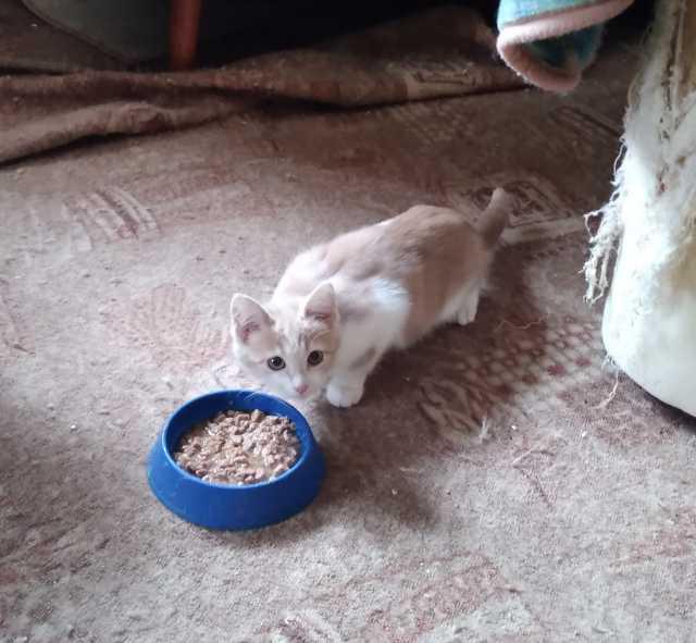 Отдам даром: Котенок 3,5 месяца