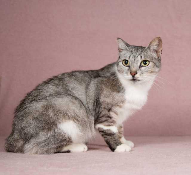 Отдам даром: Очаровательная кошка Мими в добрые руки