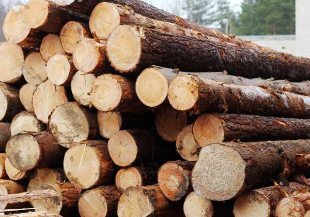 Куплю: Закупаем круглый лес береза липа вяз топ