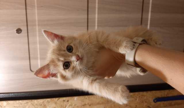 Отдам даром: Кошки