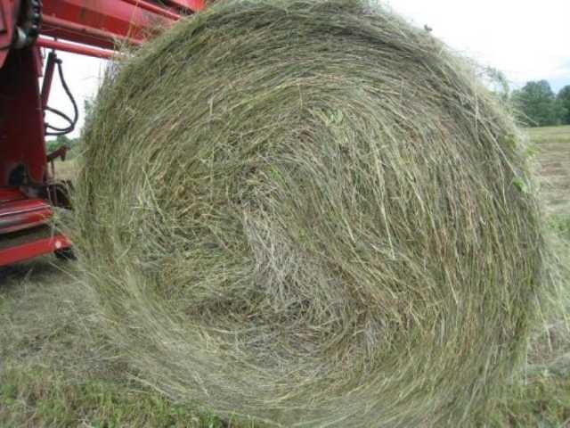 Продам: Хорошее сено в рулонах луговое пойменное
